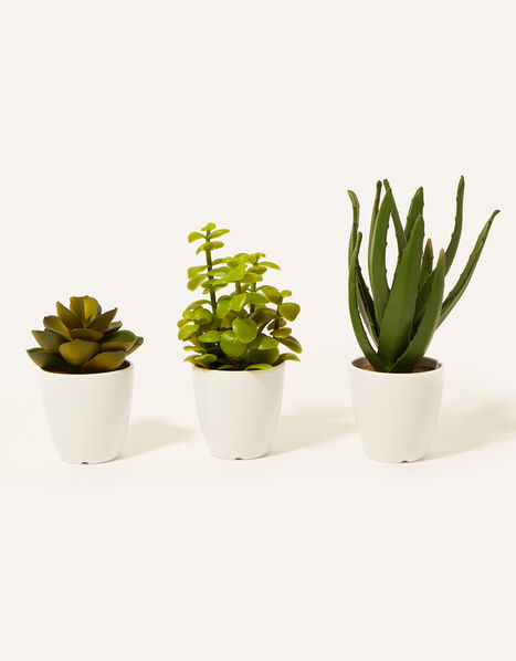 Faux Crassula, Aloe and Lotus Plant Pots, , large