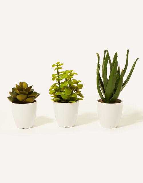 Faux Crassula, Aloe and Lotus Plant Pots, , large